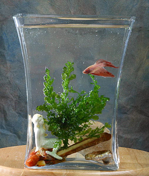 Betta pond bowls for Garden pond without fish